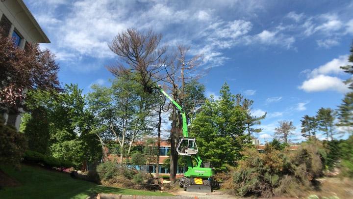 SENNEBOGEN 718 Earns Praise From Boston-Area Tree Service Company