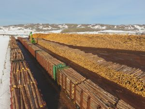 A Sea Of Logs